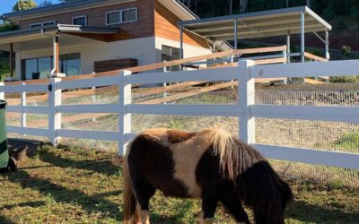 Accessible accommodation with Equine / animal assisted therapy