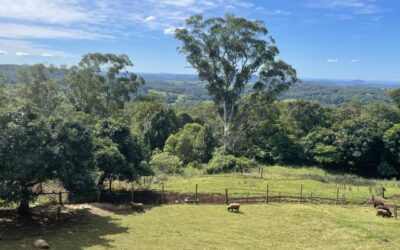 Sanctuary Lodge (With Accessible Accommodation) Sunshine Coast